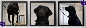 Lulu-cane-licenziato-dalla-CIA-2JPG