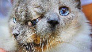 bettie bee gatto con due facce