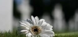 fiore cimitero festa dei morti