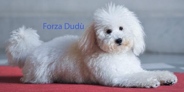 Il lato animalista di Berlusconi: nasce il sito forza-dudu.it