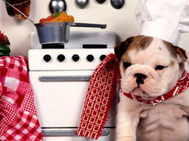 cosa mangiano i cani e cosa è meglio evitare nella loro alimentazione
