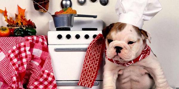 L'alimentazione corretta per i cani: ecco alcuni consigli per il loro benessere