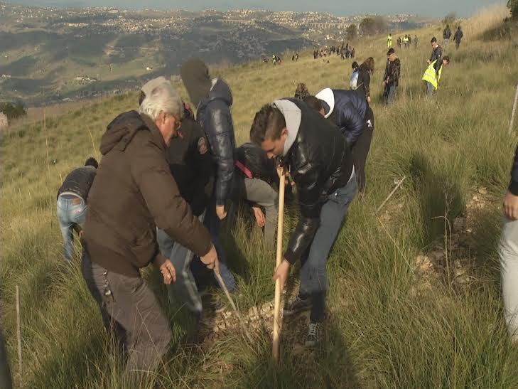 Alcamo, studenti e volontari piantano | mille alberi per ripopolare il bosco