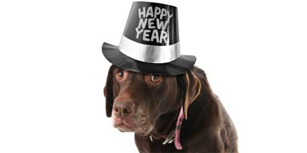 Un Capodanno a misura di cane: alcuni consigli per salvaguardare i nostri amici a 4 zampe