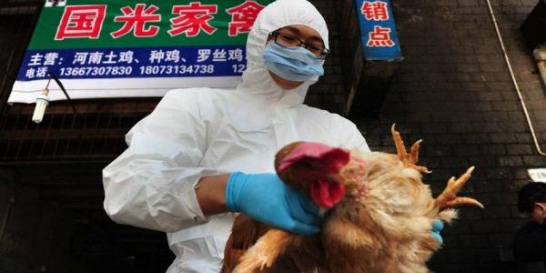 Contagio da influenza aviaria in Cina, morta una donna di 73 anni