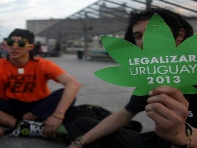 uruguay legalizzazione marijuana si del senato