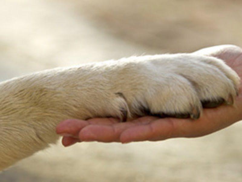 pet-therapy-animali-domestici-corsie-ospedali