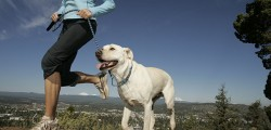 allenarsi-con-il-cane