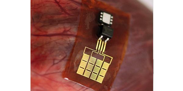 Cuore, polmoni e diaframma creano energia pulita per alimentare i pacemaker