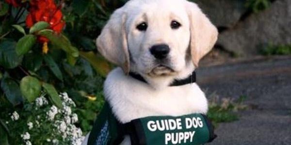 Hearing dogs, i cani guida per i non udenti