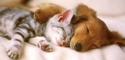 centralino soccorso animali domestici toscana