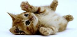 aidaa, gatti palermo, gatti torturati palermo, gatti uccisi a palermo, gatti zisa, killer gatti palermo, taglia killer gatti