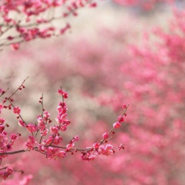 Equinozio di primavera, cosa accadrà oggi?