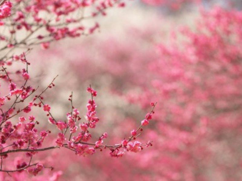 cosa accade per l'equinozio di primavera