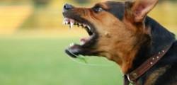 bimbo aggredito da un cane, bimbo azzannato Ragusa, cane aggredisce bimbo ragusa, cane azzanna bimbo, cane azzannato, cane Ragusa, Ragusa
