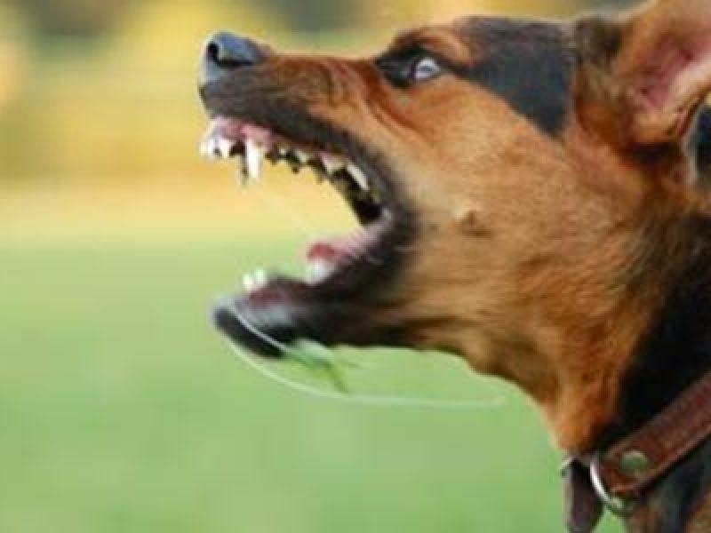 corriere morto siracusa, corriere sbranato cani, corriere sbranato portopalo di capopassero, Siracusa