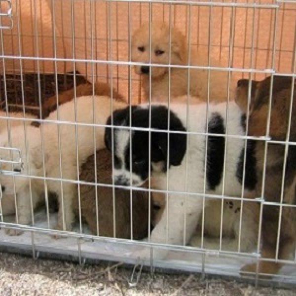 Fermati trafficanti di cani sull'A13 | Erano 220 i cuccioli stipati in un camion