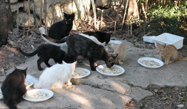 Isole Eolie, lotta al randagismo. Sterilizzati 130 gatti