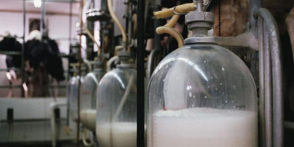 Latte fresco con data di scadenza alterata | Il Nas ne sequestra cinque mila litri