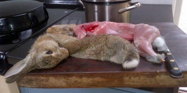 Il Gatto Vuole Mangiarsi Il Coniglio Querciacb