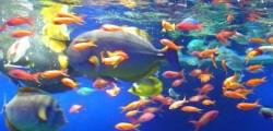 Pesci, pesci che allattano, video curiosi