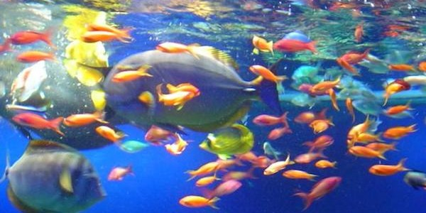Solo i mammiferi allattano falso guardate questi pesci for Mammiferi che vivono in acqua