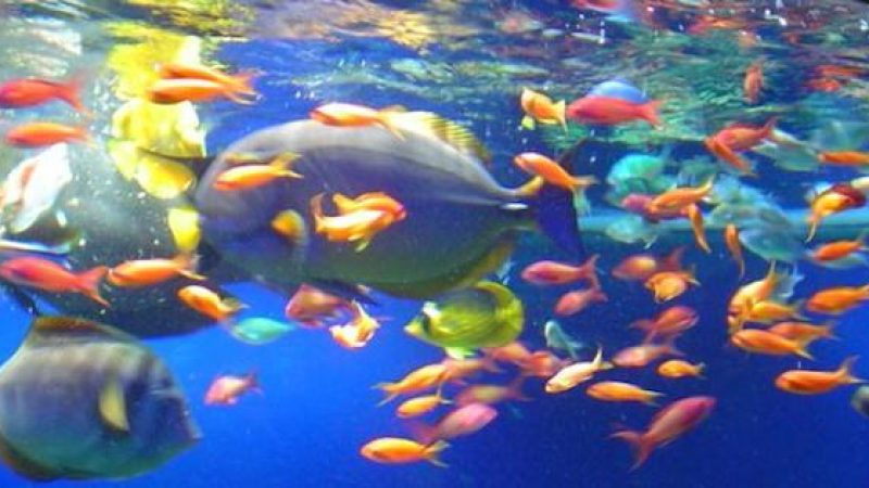 Solo i mammiferi allattano? Falso, guardate questi pesci /VIDEO