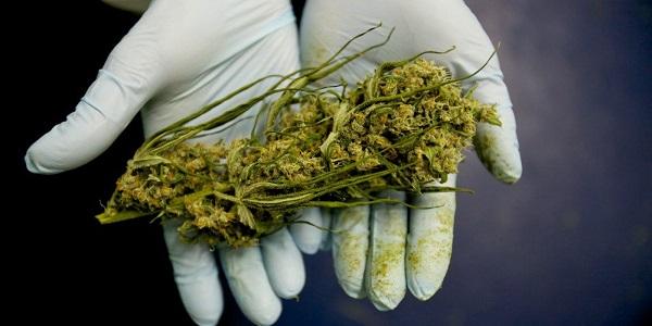 Cannabis legale, tutti la vogliono e nessuno l'approva: scontro M5S-Lega