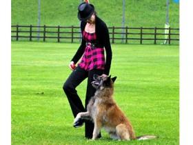 dog-dance