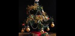 albero di natale, decorare l'albero di natale, albero di natale finto, albero di natale vero, coldiretti, albero più piccolo, albero più corto