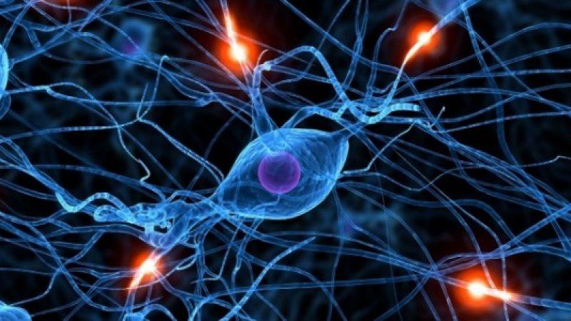 """Scoperti i neuroni che riducono l'appetito: si tratta dei miracolosi """"taniciti"""""""