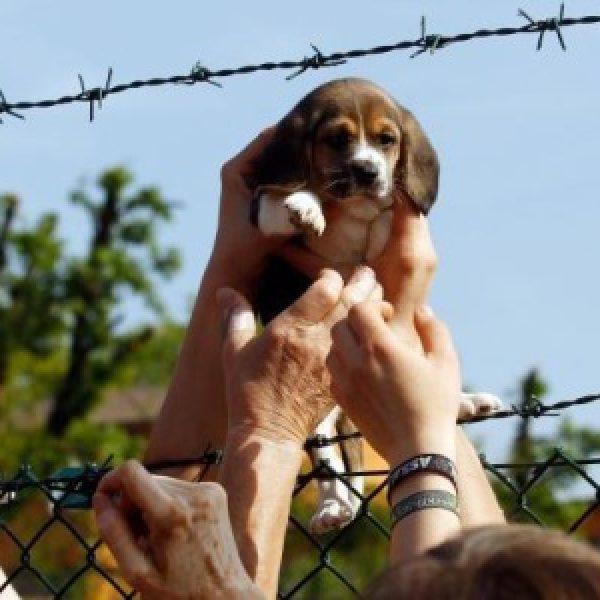 Green Hill, condannati 12 animalisti | Assaltarono un allevamento di cani