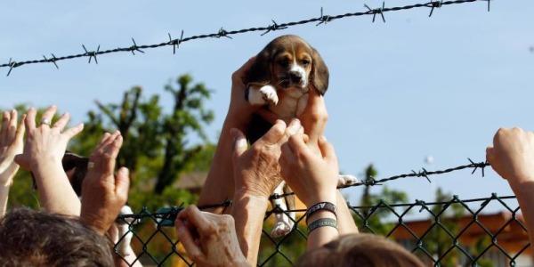 Green Hill, condannati 12 animalisti   Assaltarono un allevamento di cani