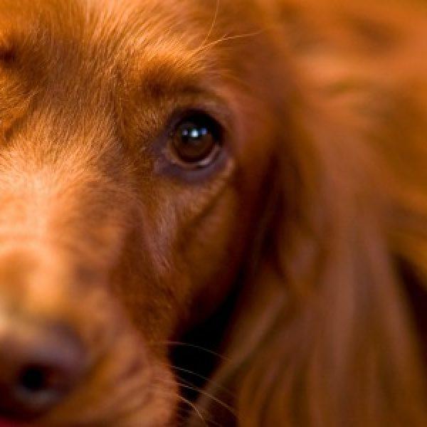 Spara al cane del vicino perché abbaia troppo | Denunciato un 53enne a Lecce