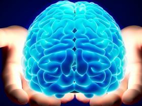 cervello, cervello in 3D, cervello stampato in 3D, harvard, Harvard cervello in 3D, Nature Physics, ricerca cervello, ricerca cervello Harvard, stampa cervello in 3D