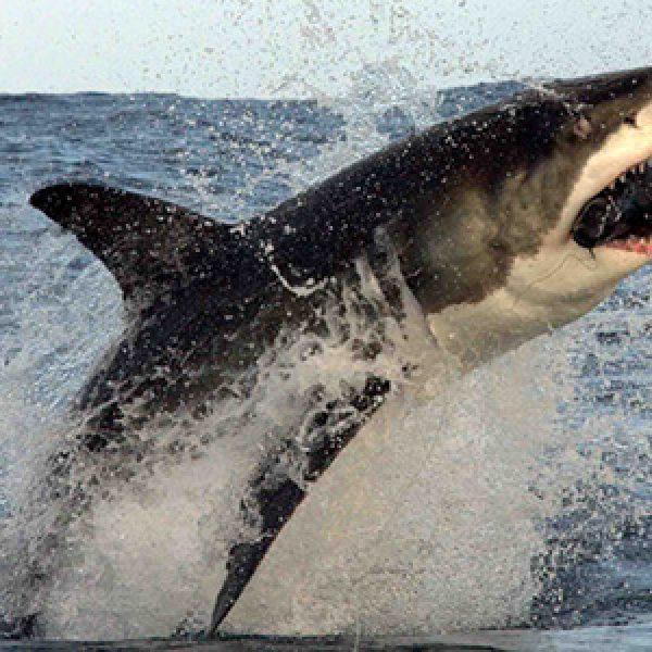 Fugge da uno squalo e si salva: ma gli era già successo con un orso e un serpente