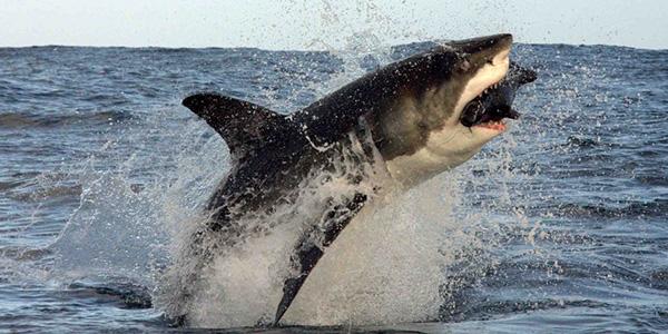 attacchi squali, attacchi squali Usa, attacco squalo, attacco squalo in Usa, bambini attaccati dagli squali, North Carolina, Oak Island, squali, squalo, Usa