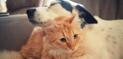 cane gatto giulezampe petizione pignoramento animali domestici