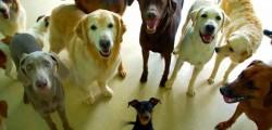 Centro trasfusionale cani, cani donatori di sangue
