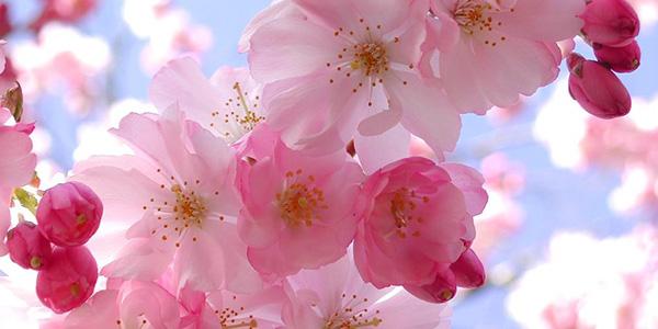 È arrivata la primavera, bel tempo ovunque |