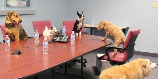 Oggi è la giornata mondiale dei cani in ufficio: con Fido meno stress al lavoro /FT