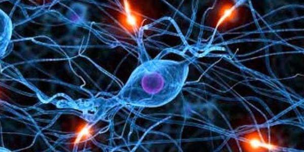 Salute, un neurone artificiale potrebbe aiutare a sconfiggere le malattie del cervello