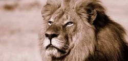 cecil, leone zimbabwe