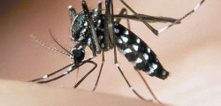Zanzara, malaria Trento, malaria Zanzara Trento, Malaria Trento ospedale, bimba morta malaria Trento