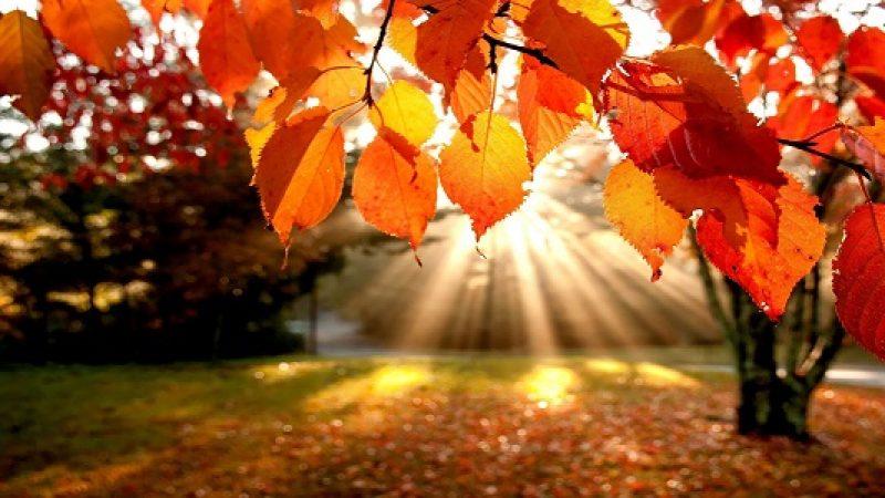 Addio estate, oggi è il primo giorno d'autunno