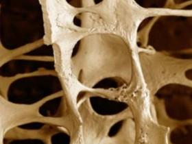 scheletro meccanismo di crescita delle ossa, ecco come crescono le ossa, crescita delle ossa meccanismo, meccanismo di crescita delle ossa