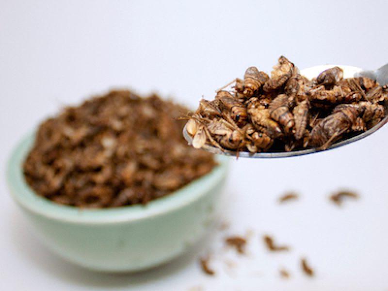 insetti a tavola, insetti cibo italia, insetti novel food, no insetti a tavola, stop insetti italia