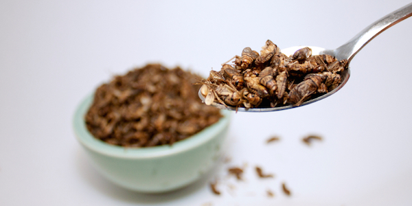 """Ue, si va verso l'approvazione del """"novel food"""": presto sulle nostre tavole insetti e altre stranezze"""