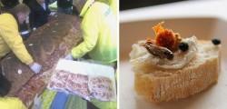 superpanino-di-carne-contro-degustazione-di-insetti