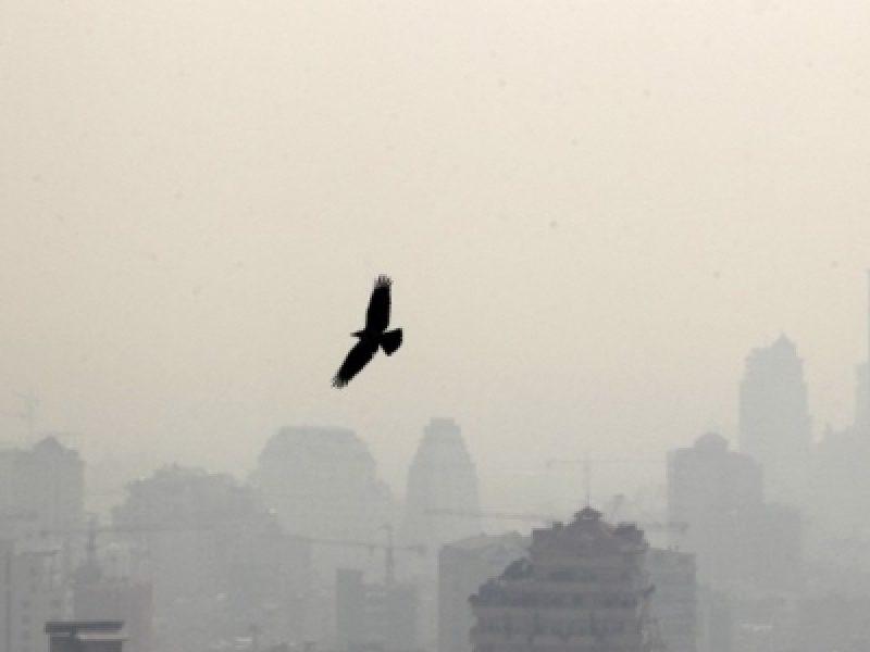 12 milioni di morti, dati Oms, dati Oms inquinamento, inquinamento, inquinamento Europa, oms